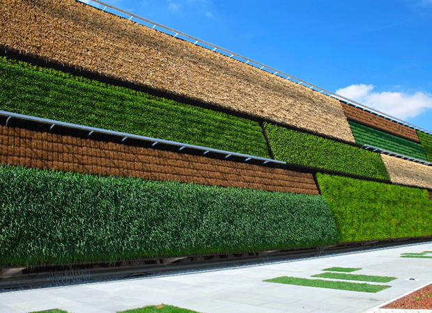 Crops grown on the walls of multistory buildingsnow