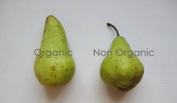 Organic+2
