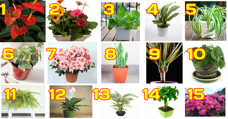 he-top-15-plants-for-removing-indoor-toxins-according-to-nasa-copy