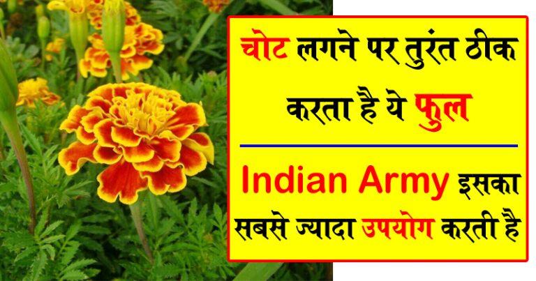 ये दुनिया की सर्वोतम औषधि है, Indian Army भी इसे इस्तेमाल करती है