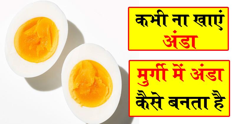 कभी भी ना खाएं अंडा ! जानिए मुर्गी ...